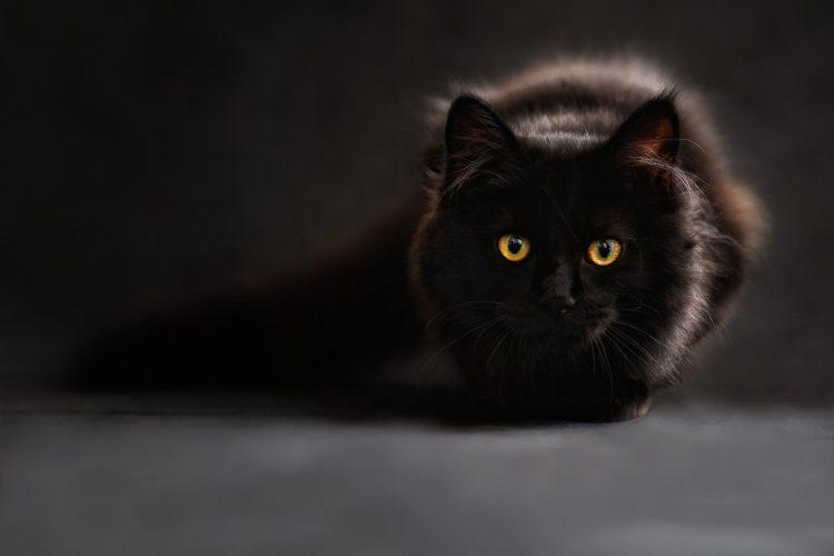 Vad du behöver veta om kattmat