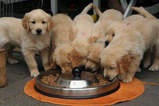 Livets överflöd Premium djurfoder, hur mycket älskar du dina husdjur?